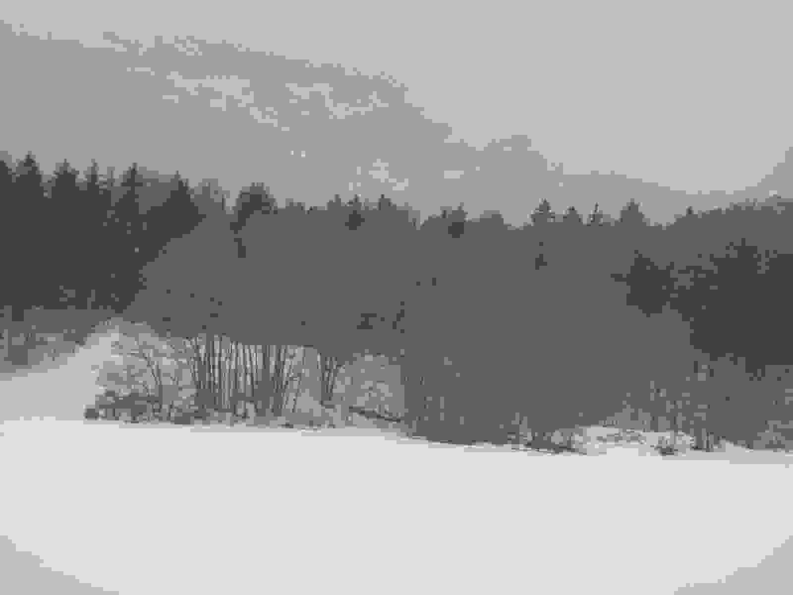 IMG_2598 [1600x1200]